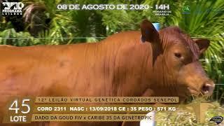 Coro 2311 b4