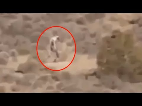 WATCH: Five Mysterious Creatures Caught On Camera & Spotted In Real Life - NewsIC
