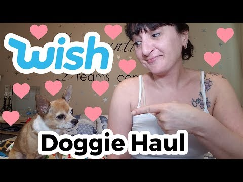 Testing Out A Dog Haul From WISH #4
