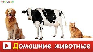 [ ДОМАШНИЕ ЖИВОТНЫЕ для ДЕТЕЙ ] с ГОЛОСАМИ. Развивающие ВИДЕО про животных для детей в HD