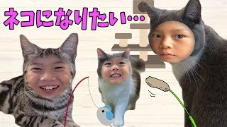 猫になりたい⁉️仲良し兄弟 Brother4の初体験!かわいい猫にちゅーるをあげたらどうなる?Japanese Cat Café