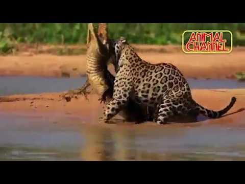 EPIC Animal Attacks Compilation