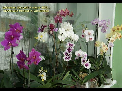 Мои ОРХИДЕИ:потрясающие ЦВЕТУНЬИ марта!Цветение моих орхидей (новинок) в марте,2021.