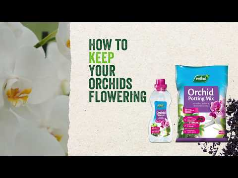 Westland Orchid Feed in pack Video