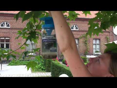 Video preview Biologische vliegenlokstof