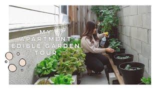 My Apartment Edible Garden Tour 🍅🥬🌶🍓   Jamie Kate