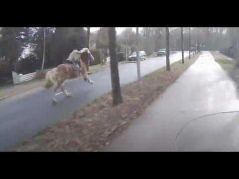 Погоня за сбежавшей лошадью на скутере