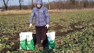 Насіння ярого ріпака Сіріус 85-95 днів. Врожайний гібрид ярого ріпаку Сіріус 40-45 ц/га, олія 47%,155 см. от компании ТД «АВС СТАНДАРТ УКРАЇНА» - видео 1