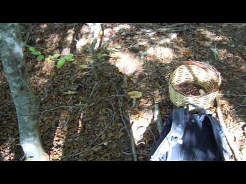 Se laceto a un fungo aiuta la posizione