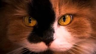Ani Difranco- Hypnotized