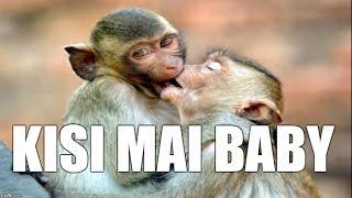 Funny Samoa Song - by LOVE.KING - Kisi Mai Baby