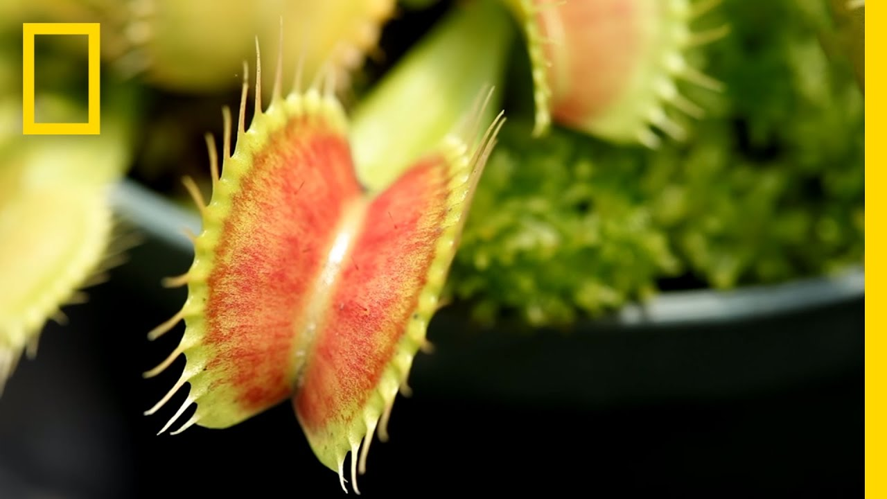 Confiscated Plants Get 2nd Life | National Geographic thumbnail