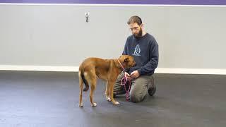 Training a Fear Aggressive Dog