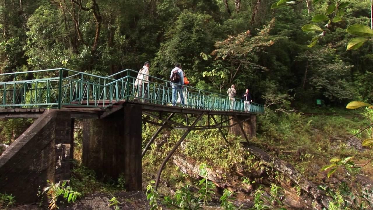 Madagaskar: Ranoma-NP Goldener Bambuslemur (1:20)