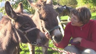 Training The Miniature Donkeys For Therapeutic Riding