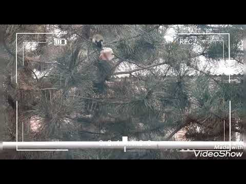Синички и дрозды. Скрытая съемка птиц. Видео о природе.