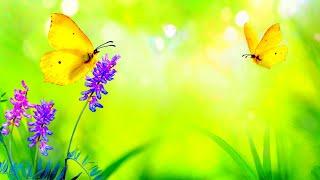 Calming Self Love Music   528Hz Miracle Music   Enhance Positive Vibe   Relaxing Meditation Healing