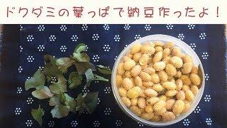 ドクダミの葉っぱで納豆作ったよ