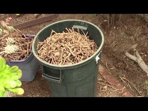 Backyard Ecological Landscape: Mulching and Planting