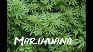 Marihuana | Nijak