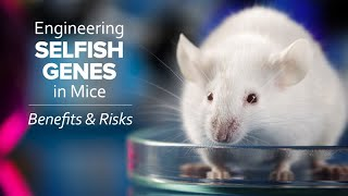 Engineering 'Selfish' Genes In Mice: Benefits And Risks - Exploring Ethics