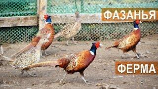 """Обзорная экскурсия по фазаньей ферме """"Русское подворье"""""""