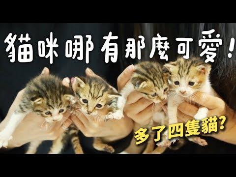 黃阿瑪的後宮生活 當起了貓咪保母 養了四隻小貓咪