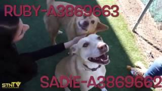 Adopt a Dog in Phoenix: Ruby & Sadie