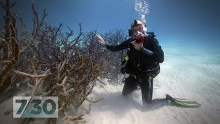 The Reef Pt 1: Is it too late to repair the Great Barrier Reef?