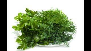 Как долго хранить свежую зелень в холодильнике | Рецепты похудения