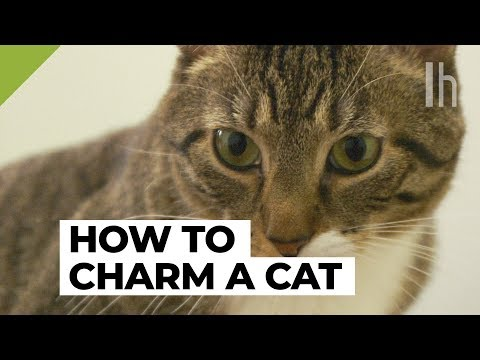 How to Win a Cat Over