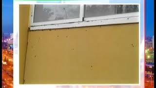 """Нашествие мух в """"Славино"""". Полчища насекомых атаковали новый микрорайон в Челябинске"""