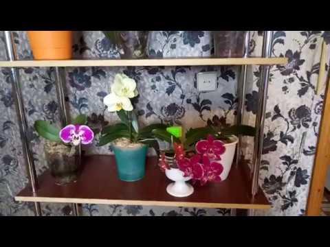 Шикарный недорогой стеллаж для орхидей своими руками !