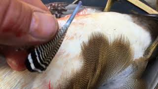 Can I Mount An Early Season Wood Duck Shot In Wisconsin?  Wood Duck Taxidermy