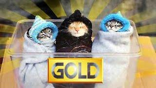 Приколы с котами 2017 ТОПовая подборка    Супер приколы 1 часть