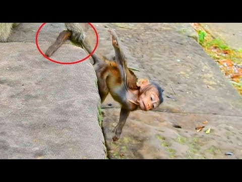 Oh God! Bri Tries Her Best Run From This Monkey, But Bri Could Not! Not Breen's Hand!