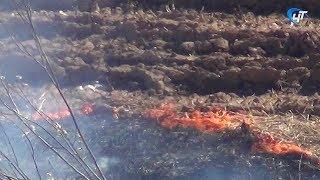Пожарные и спасатели более 100 раз выезжали на тушения за выходные