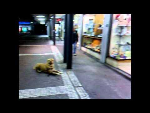 Leo aspetta serenamente la sua propritaria che compra le sigarette...