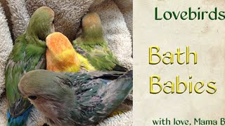 Bath Babies Lovebird Baby Care