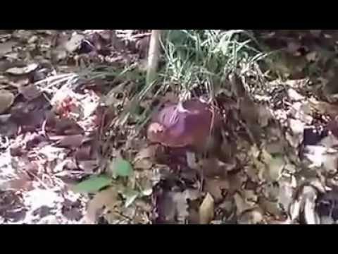 È possibile guarire un fungo di unghie