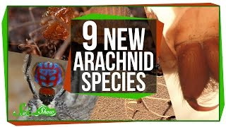 9 Amazing New Arachnid Species