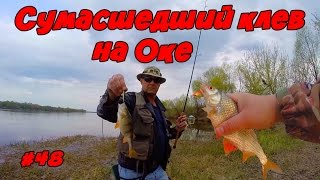 Рыбалка на оке в белеве тульской области