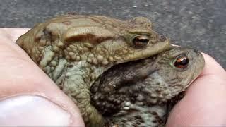 Серая жаба 2 Рюкзачок на спине