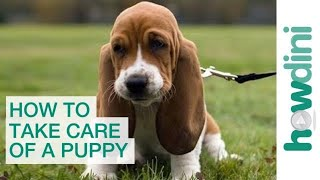 How to Take Care of a Puppy: Bringing a Puppy Home...