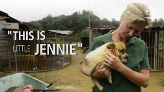Sweet, little Jennie is given a new life - free from slaughter!