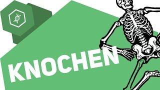 Gambar cover Aus was bestehen Knochen?! ● Gehe auf SIMPLECLUB.DE/GO & werde #EinserSchüler