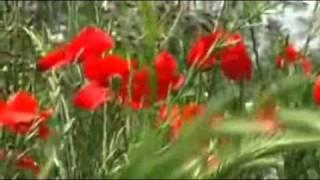 Nilla Pizzi - Papaveri E Papere