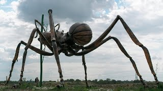 The BIGGEST ANT In The World 🐜 | Learn more about this giant insect