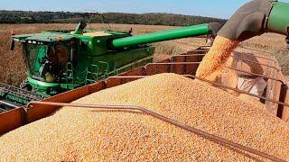 Preço do milho deve seguir ao redor dos R$ 60,00 no Brasil, mas possível alta do dólar pode elevar p