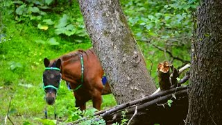 Hikers Found This Horse Alone in the Woods. Then They Looked At His Face and Realized…